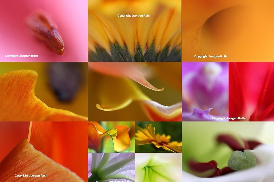 Flower Photograph - Abstract Fine Art Flower Photography by Juergen Roth