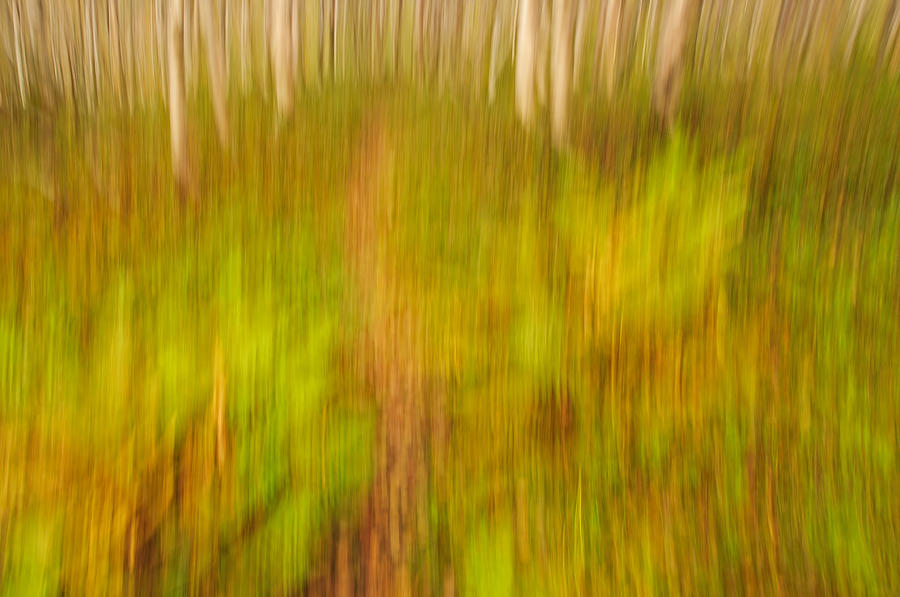 Abstract Photograph - Abstract Forest Scenery by Gry Thunes