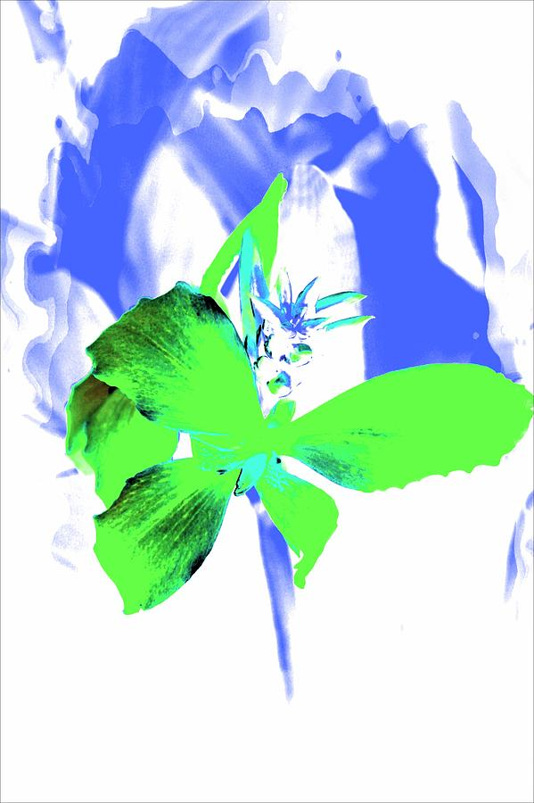 Green Flowers Photograph - Abstract Green by Cathie Tyler