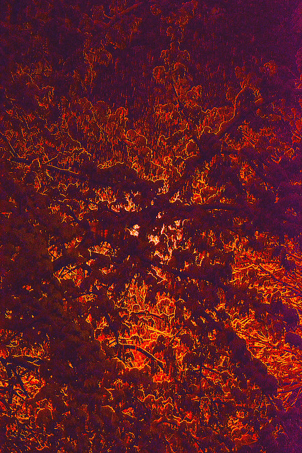 Landscape Photograph - Abstract In Snow And Leaves by Michael Fox