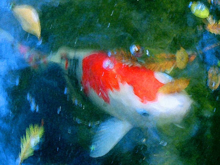 Animal Painting - Abstract Koi 3 by Amy Vangsgard