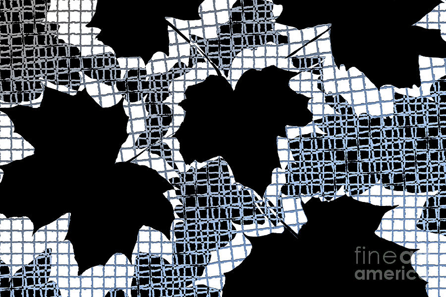 Abstract Photograph - Abstract Leaf Pattern - Black White Light Blue by Natalie Kinnear