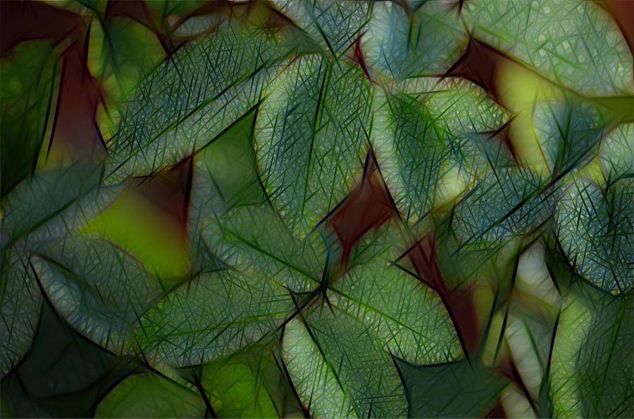 Abstract Photograph - Abstract Leaves by Ronald T Williams