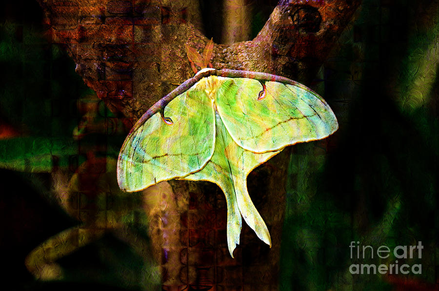 Abstract Photograph - Abstract Luna Moth Painterly by Andee Design