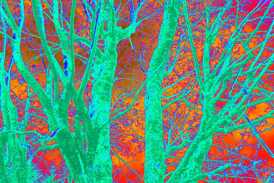 Tree Photograph - Abstract Maplei by Kathy Sampson