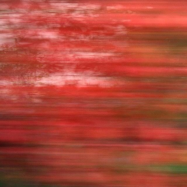 Nature Photograph - #abstract #motionblur #movement #nature by Mariana Mincu