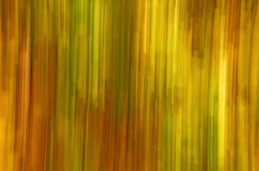 Abstract Photograph - Abstract Nature Background by Gry Thunes
