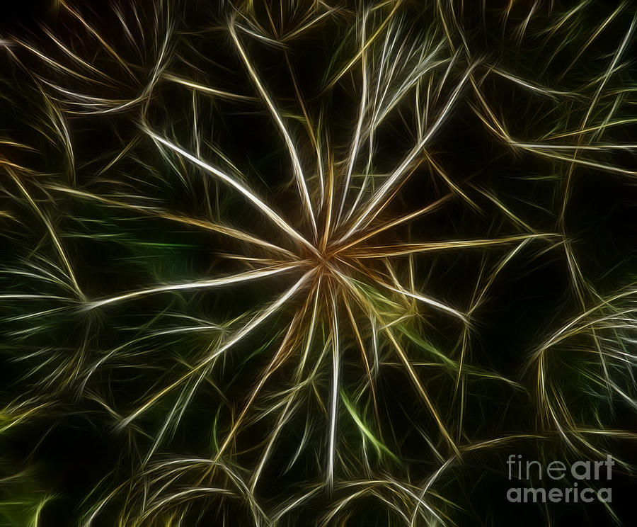 Abstract Photograph - Abstract Of Nature 2 by Vivian Christopher