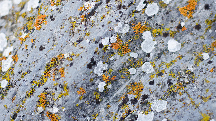 Abstract Photograph - Abstract Orange Lichen 2 by Chase Taylor