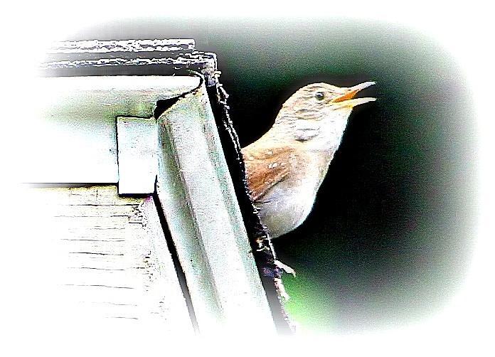 Bird Photograph - Abstract Songbird by Barbara S Nickerson