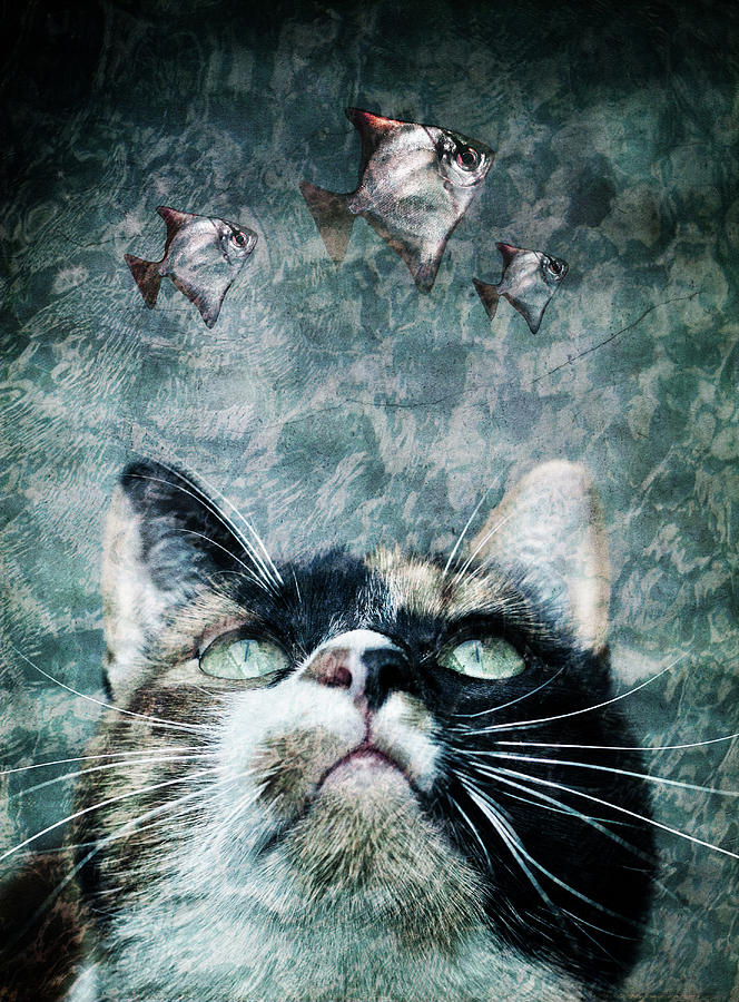 Cat Photograph - Abyss Cat Nr 2 by Laura Melis