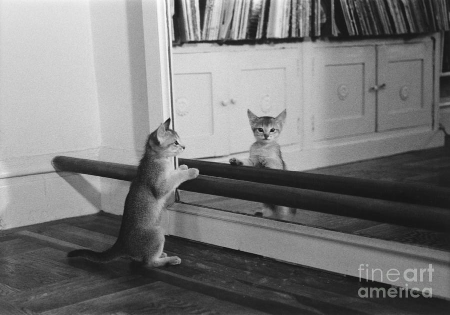 Animal Photograph - Abyssinian Kitten In Dance Studio by Joan Baron