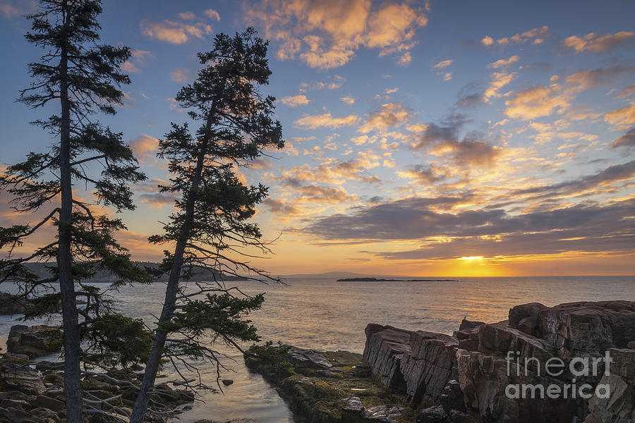 Sunset Photograph - Acadia Coast At Sunrise  by Michael Ver Sprill