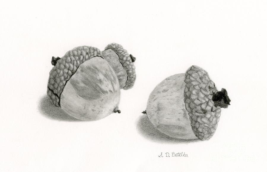 Acorns Drawing - Acorns- Black And White by Sarah Batalka