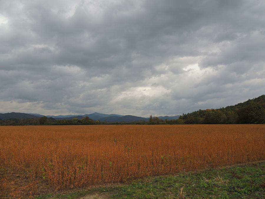 Mountains Photograph - Across The Field by Judy  Waller