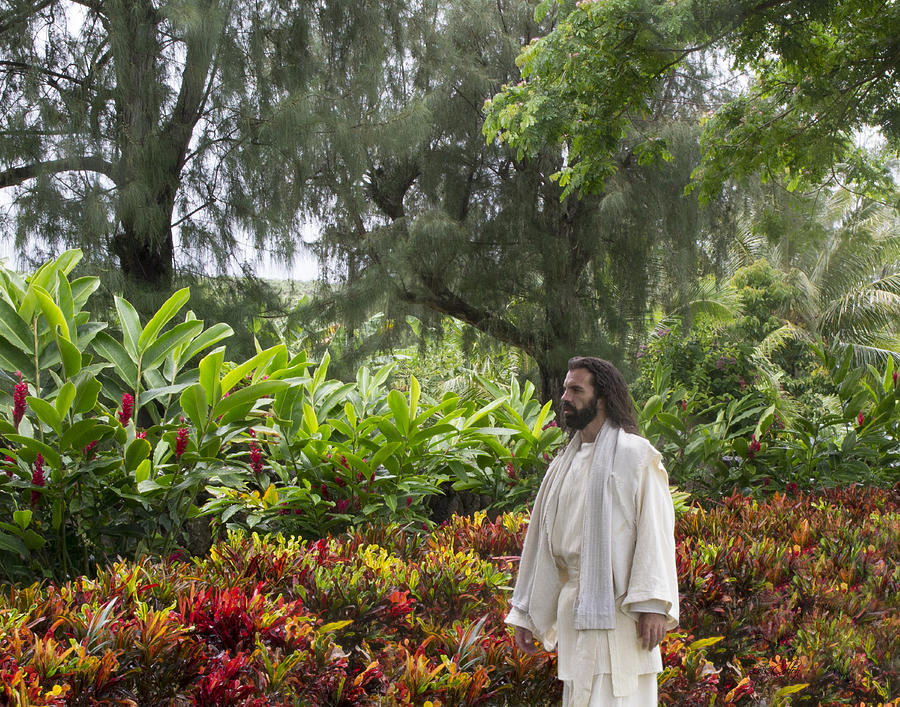 Jesus Photograph - Adam Where Art Thou? by Lois Colton