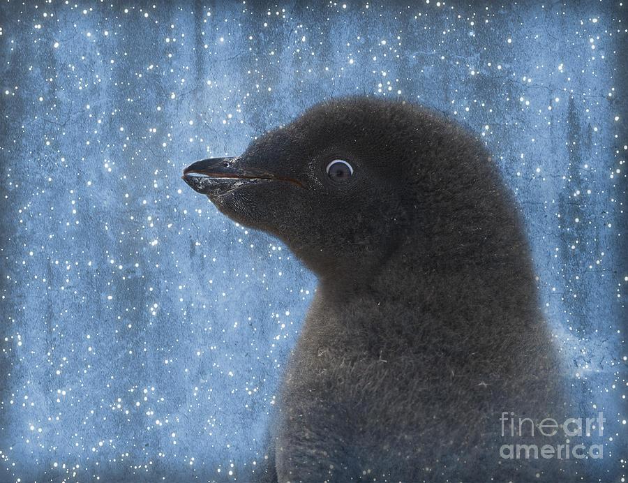 Nikon Photograph - Adelie Winter Magic... by Nina Stavlund
