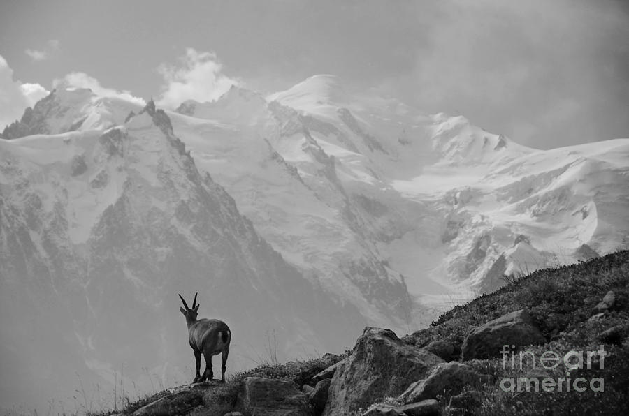 Mont Blanc Photograph - Admiring The View by Camilla Brattemark