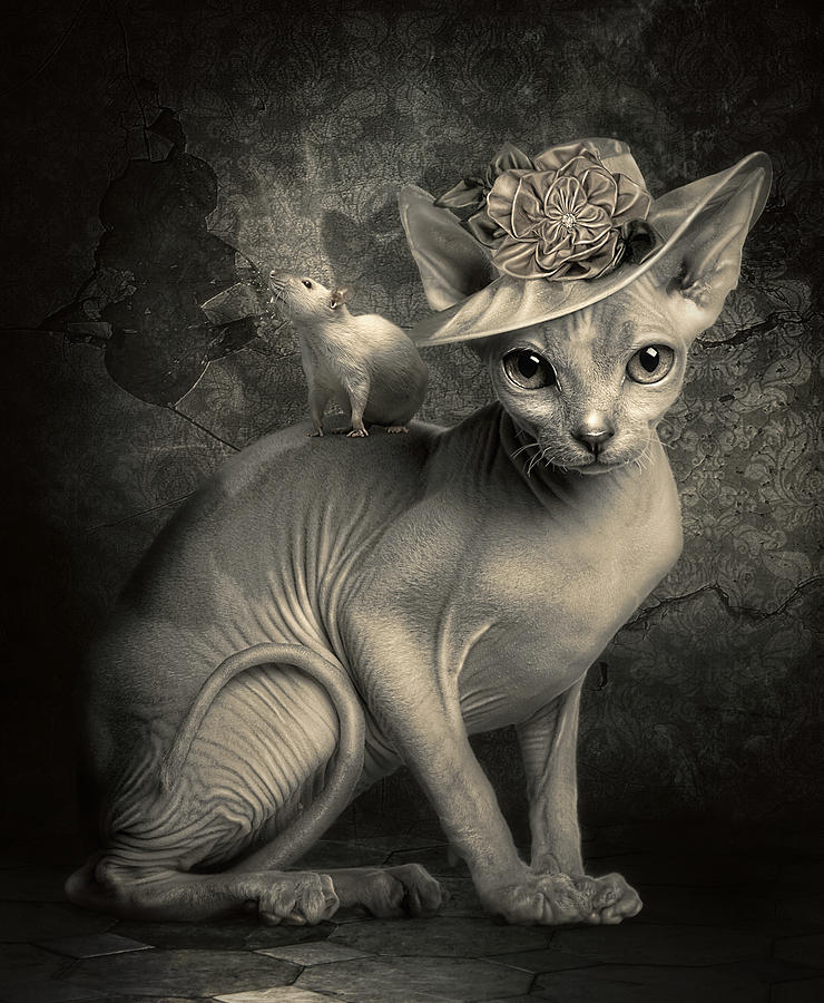 Cat Photograph - Adopted by Cindy Grundsten