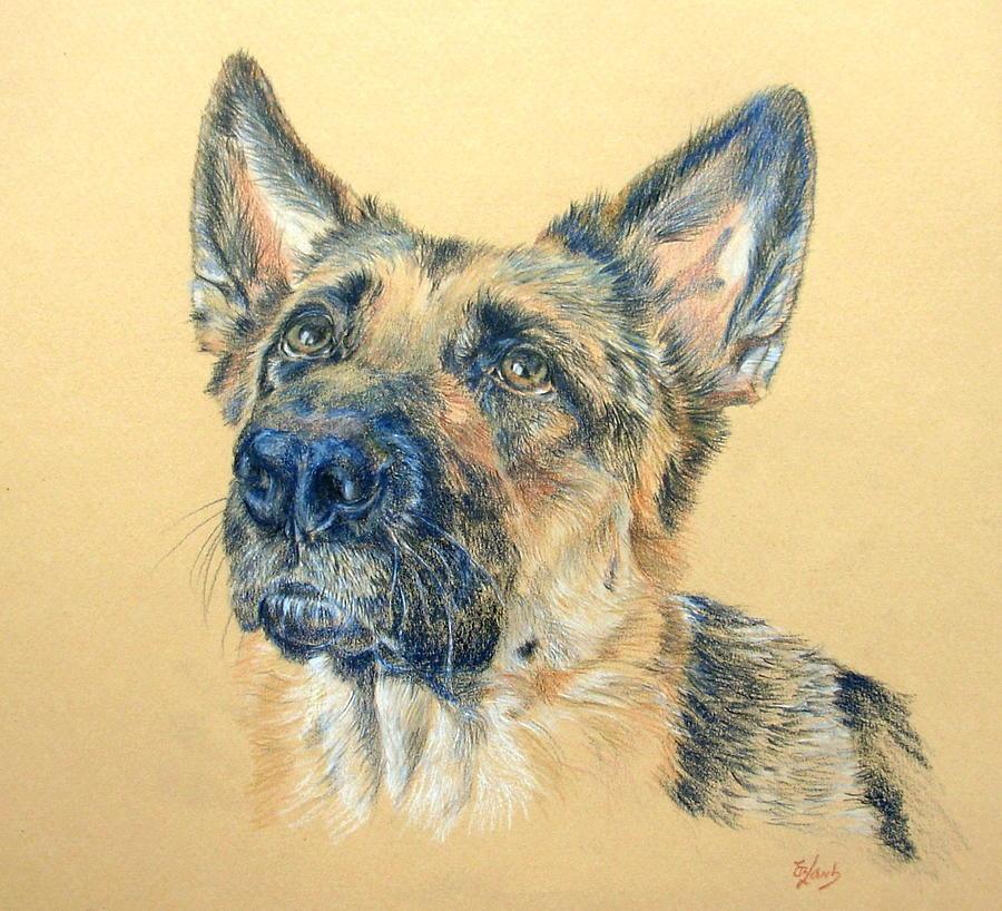 Dog Drawing - Adoring by Liz  Lamb