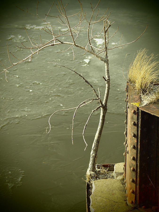 Tree Photograph - Adversity by Thomas Young