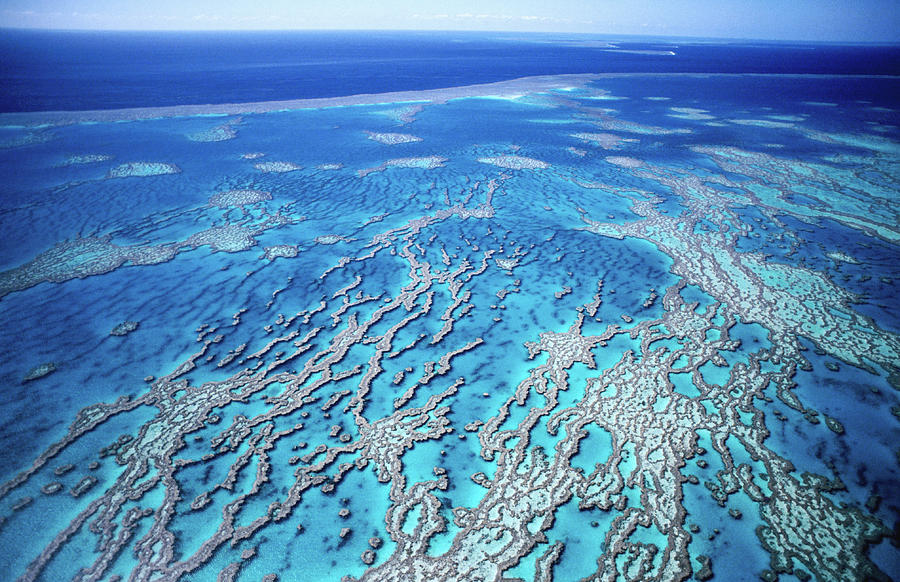 Aerial Of Great Barrier Reef, Near Photograph by Holger Leue
