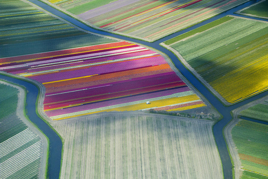 Aerial View Of Flower Fields In Spring Photograph by Frans Sellies