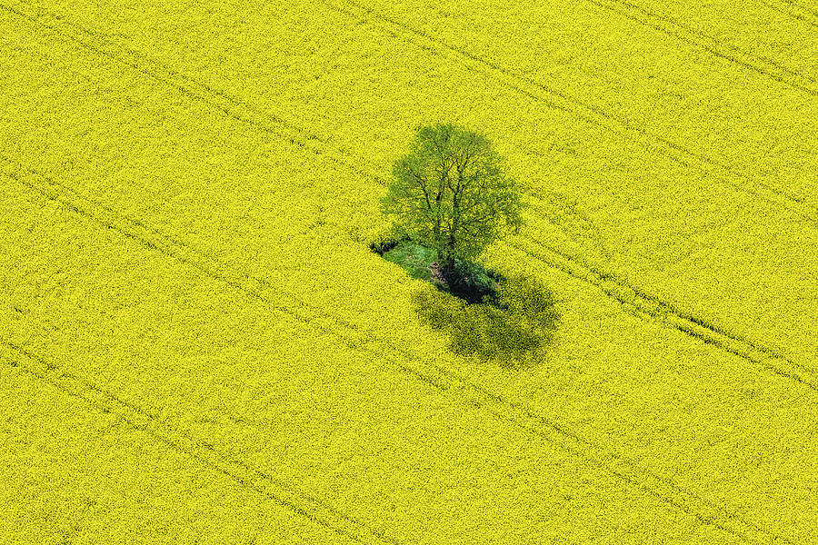 Aerial View Of Oilseed Rape Field Photograph by Cinoby