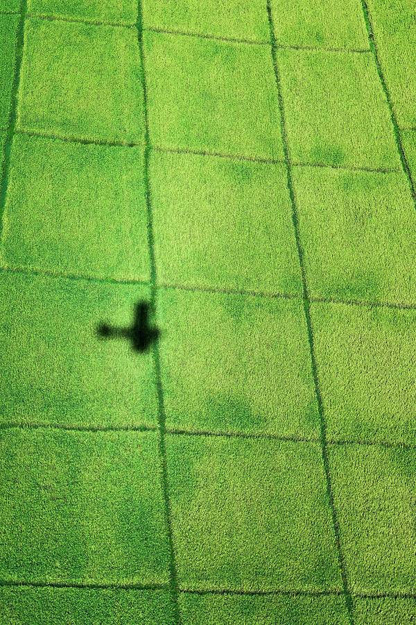 Aeroplane Shadow On Rice Paddy Fields Photograph by Pete Atkinson