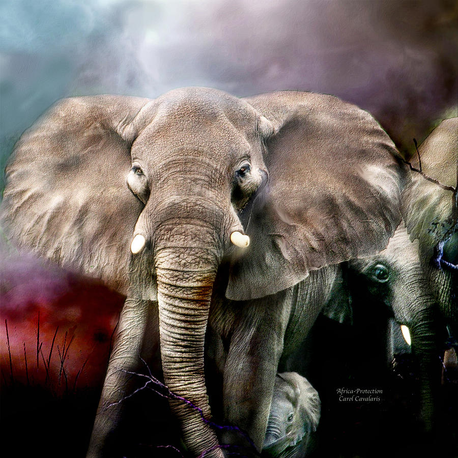Elephant Mixed Media - Africa - Protection by Carol Cavalaris