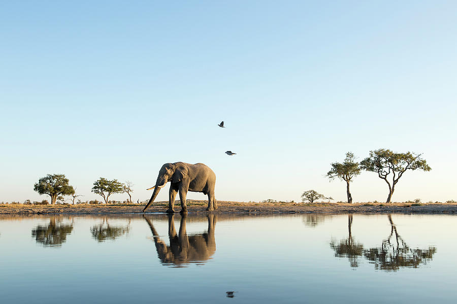 African Elephant At Water Hole, Botswana Photograph by Paul Souders