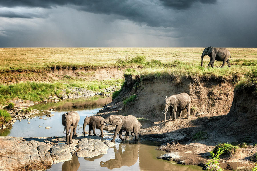 African Elephants Crossing A River Photograph by Mike Hill