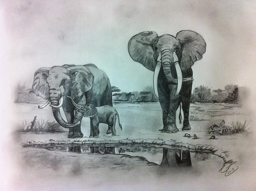 Pencil drawing drawing african elephants by erin filan