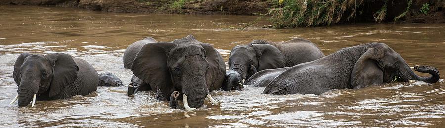 African Elephants Having A Bath In Mara Photograph by Manoj Shah