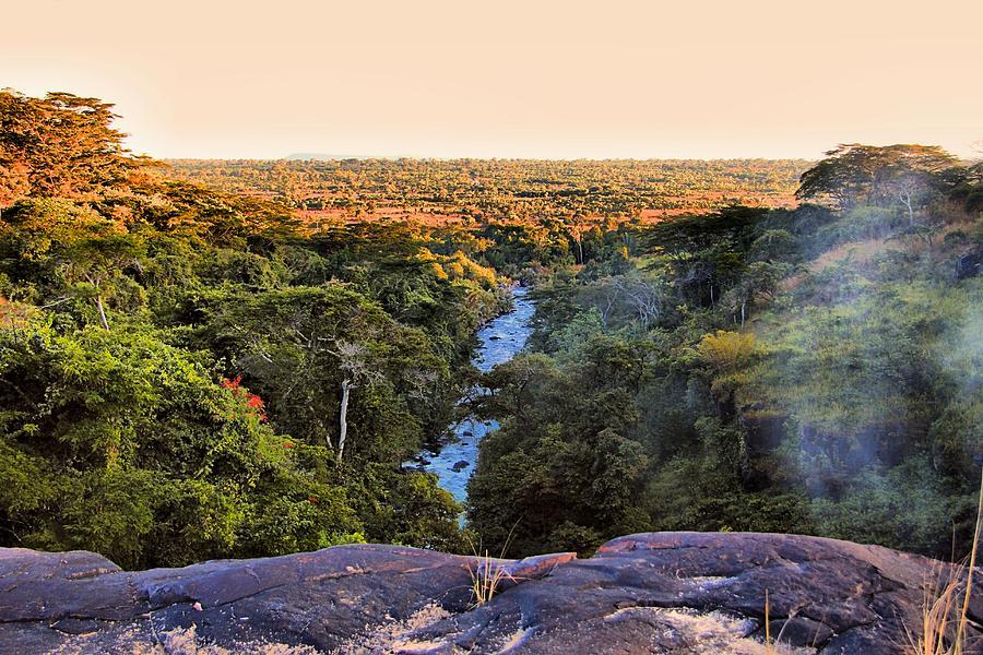 Savannah Photograph - African Forest by Martin Michael Pflaum