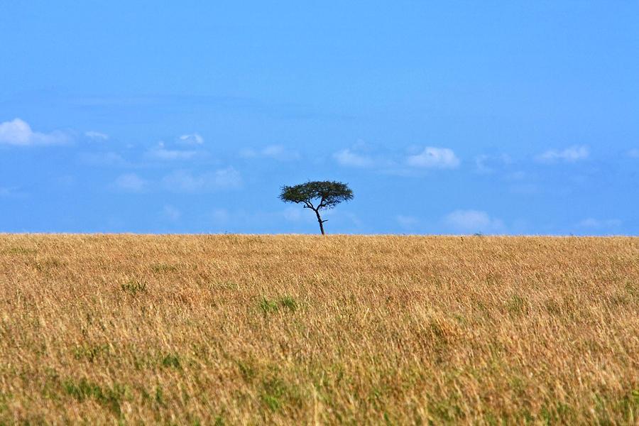 African Grasslands Photograph By Aidan Moran