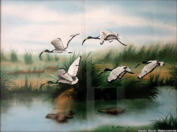 Birds Painting - African Ibis by Sandra Stone