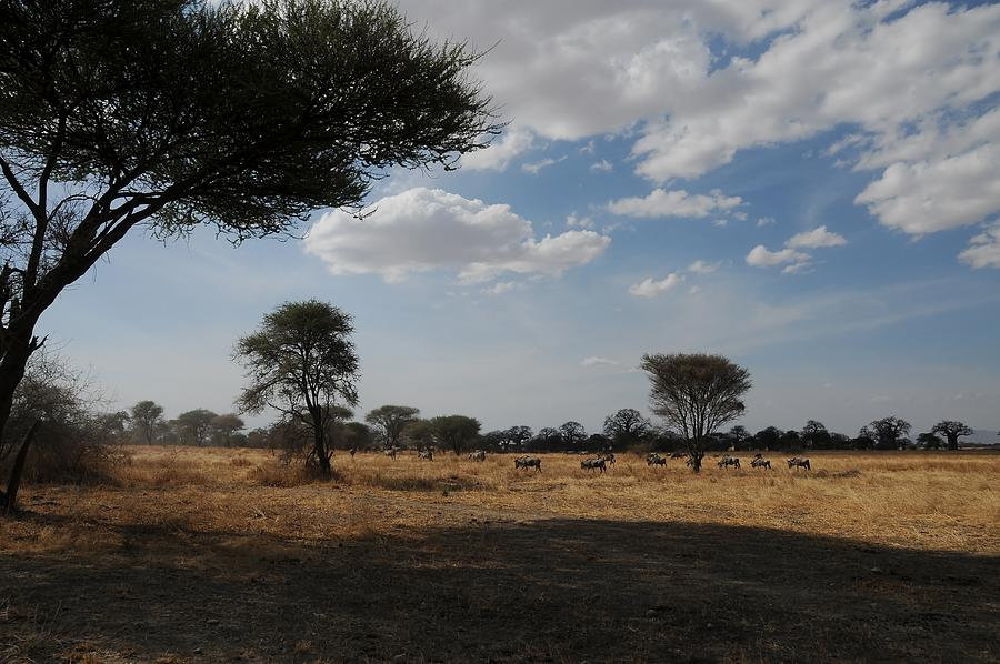 Landscape Photograph - African Series Clouds by Katherine Green