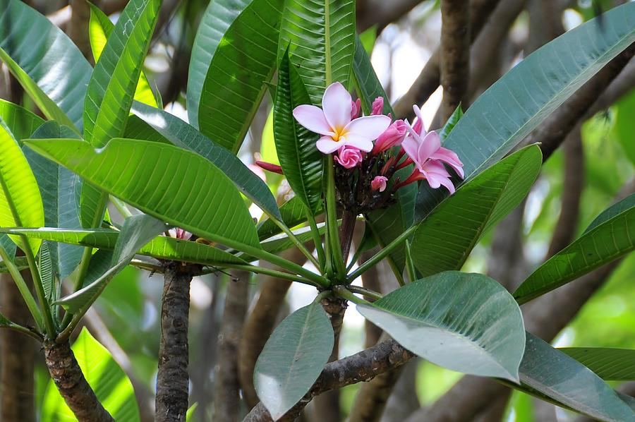 Tanzania Africa Photograph - African Series Flower In Tree by Katherine Green