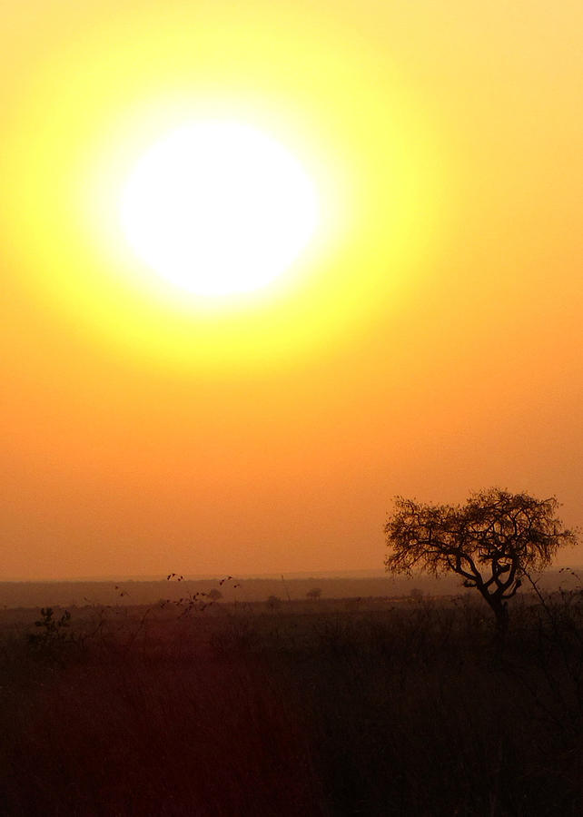 African Sun Photograph By Wendy Altona