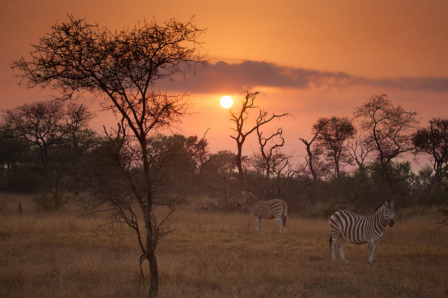 Africa Photograph - African Sunrise by Craig Brown