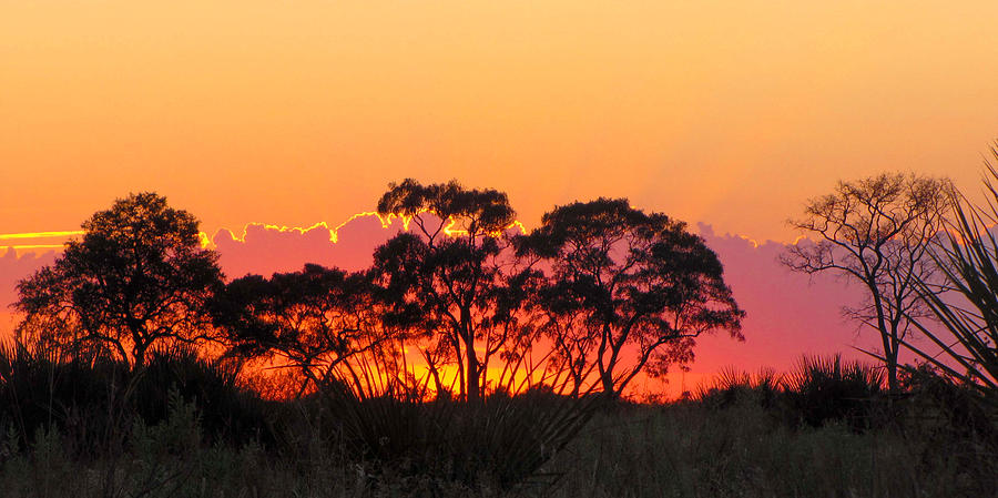 Landscape Photograph - African Sunrise by Karen E Phillips