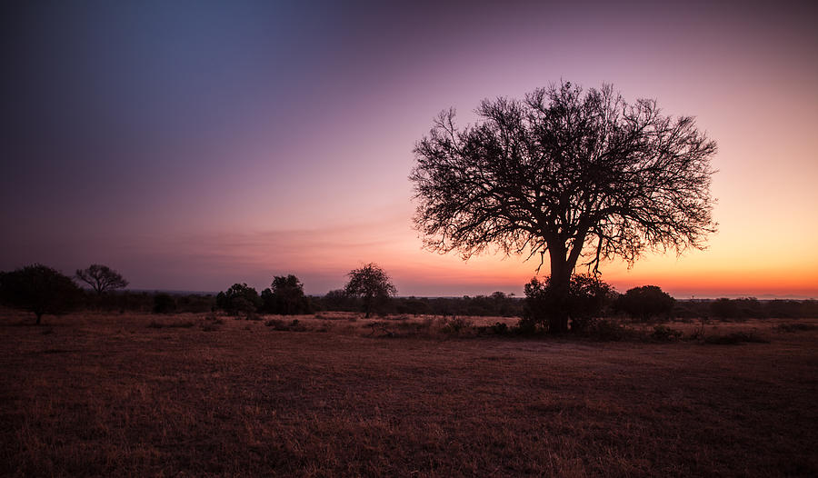 Africa Photograph - African Sunset by Craig Brown