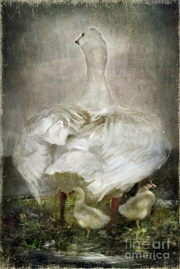 Birds Digital Art - After A Stormy Night by Adelita Rog