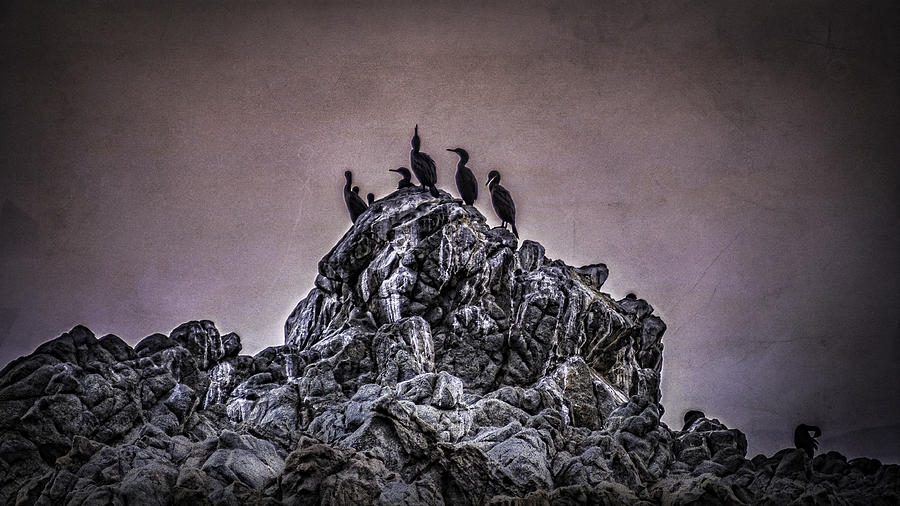 Cormorants Photograph - After Hours by Donna Miller