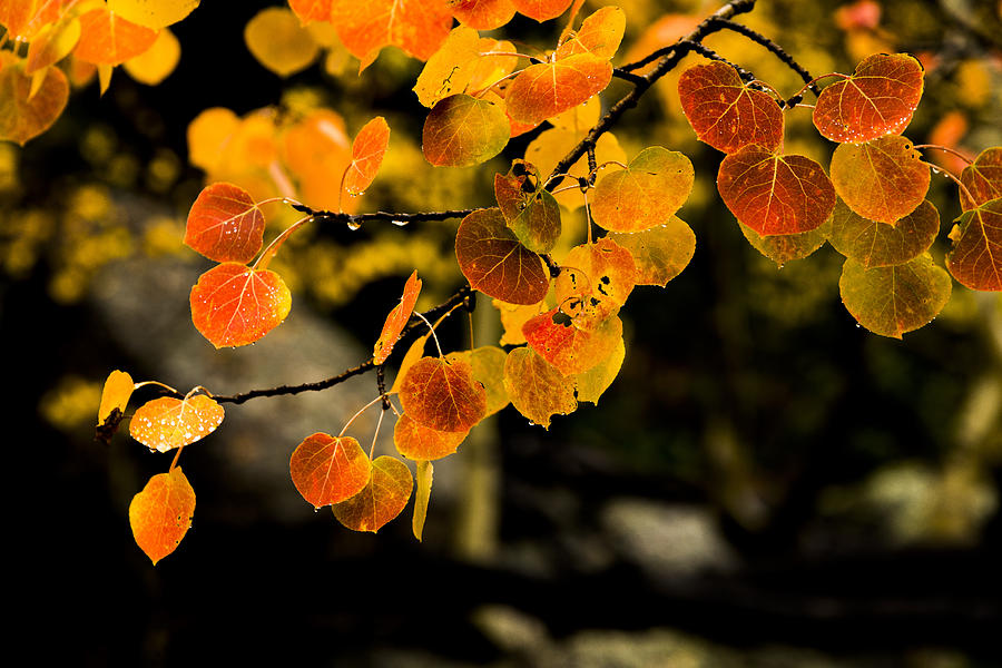 Fall Photograph - After Rain by Chad Dutson