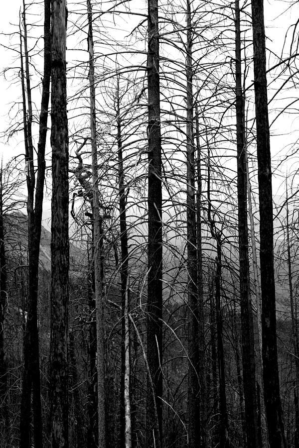 Trees Photograph - After The Fire by Joe Kozlowski