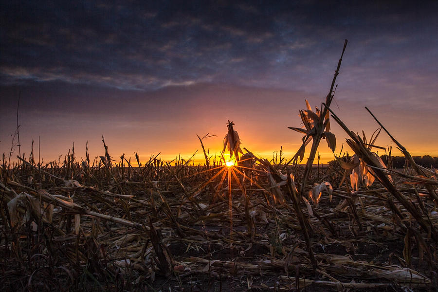 After the Harvest  by Aaron J Groen