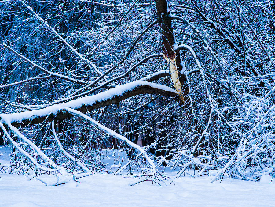Blue Photograph - After The Icy Rain - Featured 3 by Alexander Senin