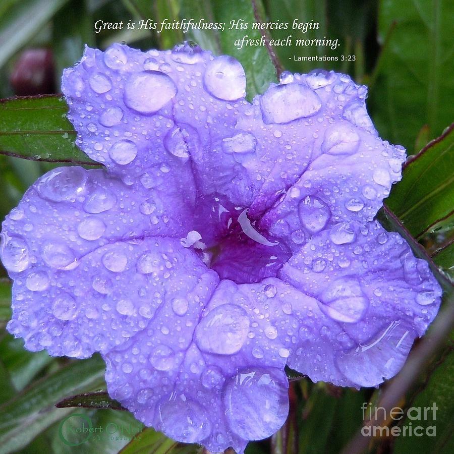 Flower Photograph - After The Rain #3 by Robert ONeil